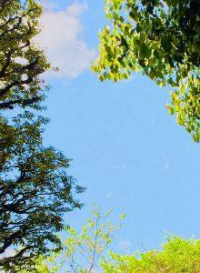 杉並区の公園(投稿者:おりひめ☆)