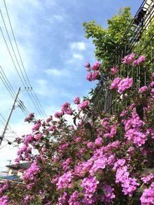 横浜(投稿者:ぽん)