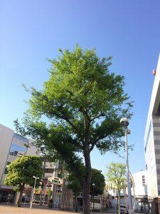 神奈川県・大和駅前(投稿者:桃徹子)