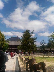 東大寺(投稿者:奈良教会 ゆりえ)