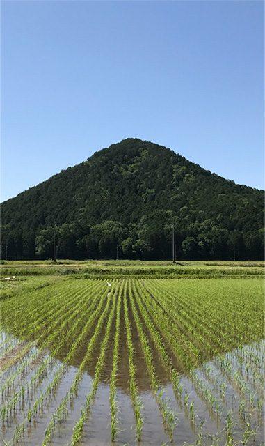 兵庫県丹波市市島町(投稿者:忠士)