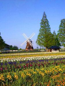 千葉県柏・あけぼの山公園(投稿者:黄色いバラ)