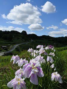 奈良県明日香村(投稿者:Sカメラマン)