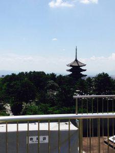 県庁屋上(投稿者:友里江)