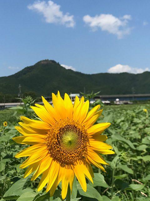 兵庫県丹波市(投稿者:忠士)