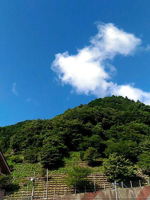 奈良県南部(投稿者:友里江)