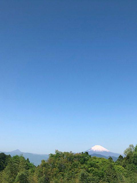 神奈川県厚木市(投稿者:黄色いバラ)