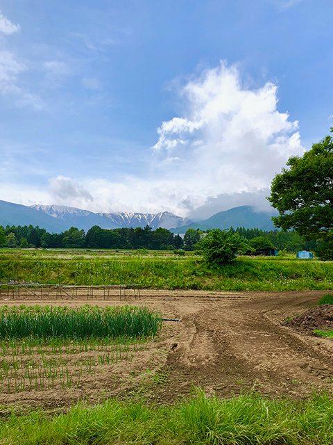 長野県・穂高(投稿者:黄色いバラ)