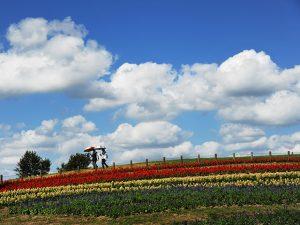 馬見丘陵公園(投稿者:奈良教会HP専属カメラマンS)