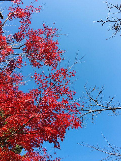 奥石神社(投稿者:はやちゃんママ)