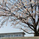 滋賀県近江八幡市(投稿者:おたすきタヌキのお父さん)