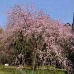 彦根の井伊神社(投稿者:琵琶湖大ナマズ)