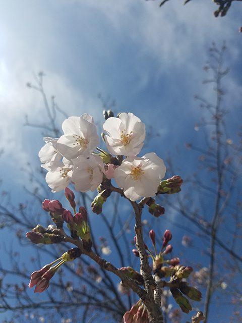 神戸(投稿者:えみちゃん)