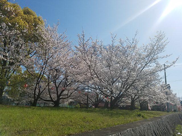 松山市石手川公園(投稿者:4人のママ)