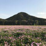 兵庫県丹波市(投稿者:yoshimi)