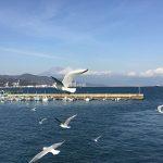 清水港の遊覧船上から(投稿者:侑希&晃史&昌孝)
