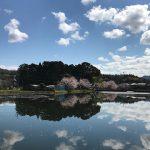 京都府福知山市(投稿者:yoshimi)