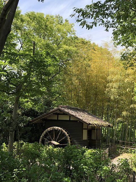 府中郷土の森公園(投稿者:多摩のばあちゃん)