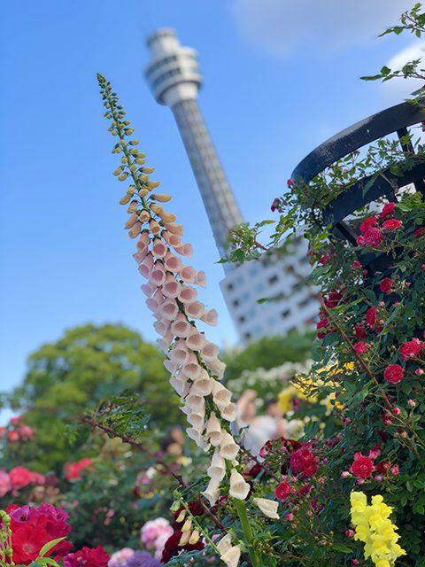 神奈川県・横浜市(投稿者:黄色いバラ)