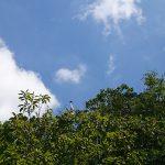 滋賀県三上山(投稿者:琵琶湖大ナマズ)