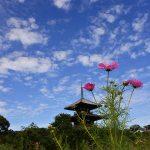 法起寺(投稿者:Sカメラマン)