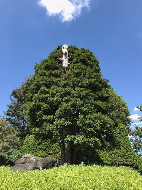 法輪閣庭園(投稿者:m.yoshimi)