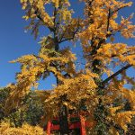 京都市左京区(投稿者:m.yoshimi)