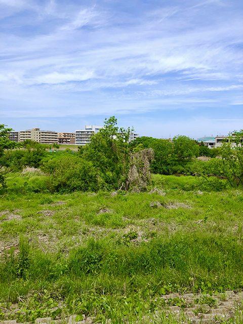 神奈川県・横浜市(投稿者:桃鉄子)