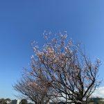 横浜市(投稿者:panorama)