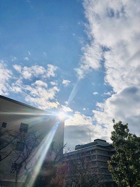 東京都杉並(投稿者:sakuramori)