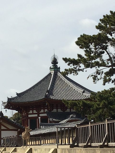 南円堂(投稿者:昌孝&恭司)