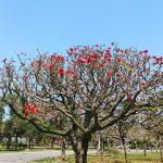 沖縄県総合運動公園(投稿者:なんくるないさぁ)