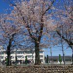 小学校(投稿者:MASAMITSU)