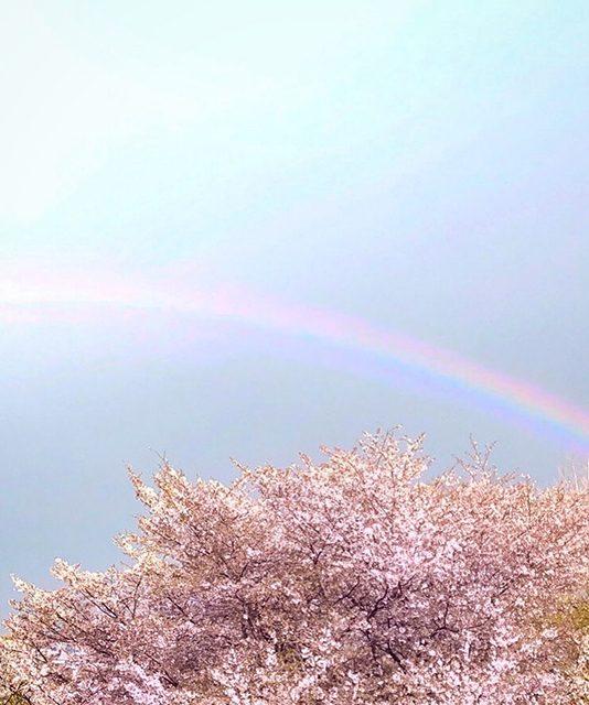 神奈川県 海老名市(投稿者:四角いサボテン)