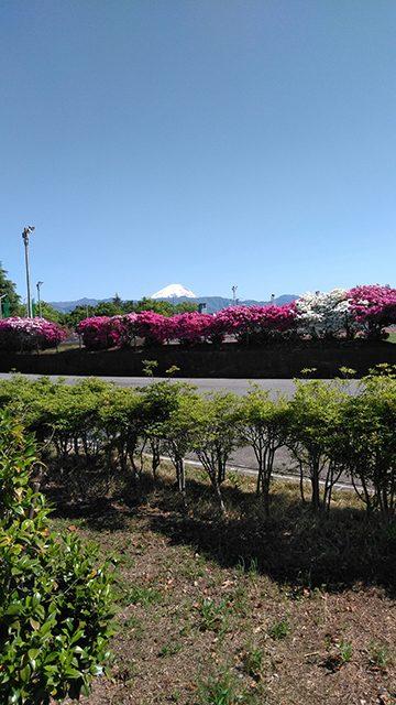 山梨県甲府市緑ヶ丘グラウンド(投稿者:坂本桂子)