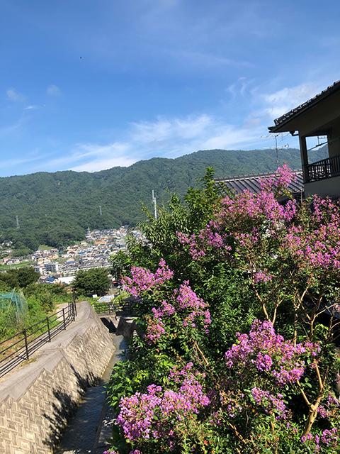広島市 自宅の庭(投稿者:はたこ)