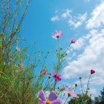 福岡県・秋月(投稿者:モモ )