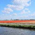 オランダ/キューケンホフ公園(投稿者:有賀通雄)