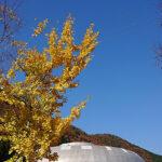 岐阜県 石の博物館(投稿者:古田恭子)