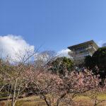 笠山山頂公園(投稿者:山根貴文)