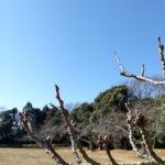 いわき市内公園(投稿者:伊藤順朗)