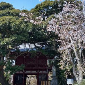 松戸本土寺山門(投稿者:石井 龍)