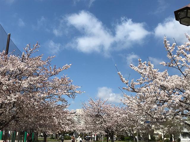 都立宇喜田公園にて(投稿者:きみ)