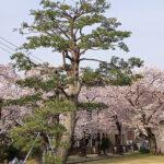 名古屋西教会のお庭から撮影(投稿者:ベル)