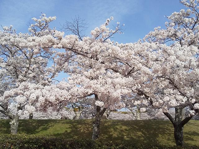 兵庫県明石市 石ケ谷公園(投稿者:トモタン)