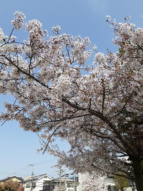 京都・宇治市の公園(投稿者:竜馬ファン)