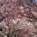 都立宇喜田公園(投稿者:きみ)