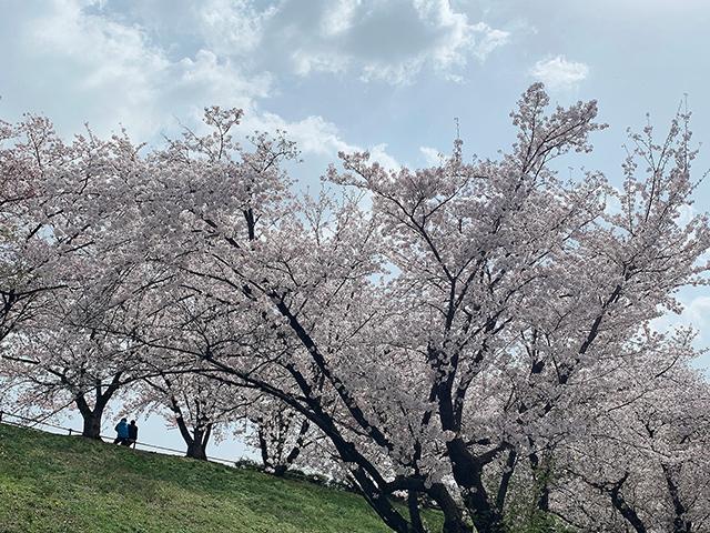 牧野ヶ池緑地公園(投稿者:木村 佳代)