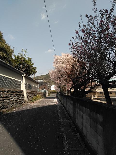 小学校の裏道(投稿者:kashiyamada)