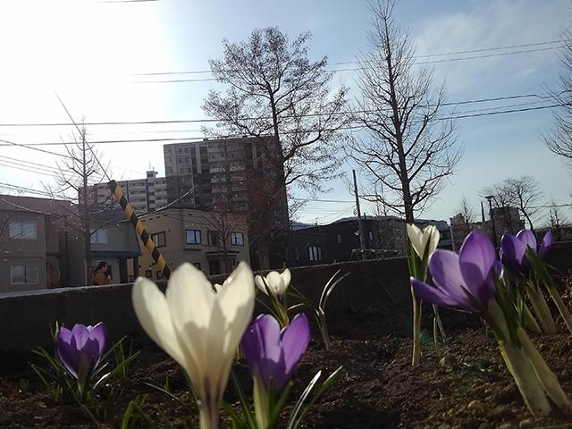 札幌市西区(投稿者:入江敬三)